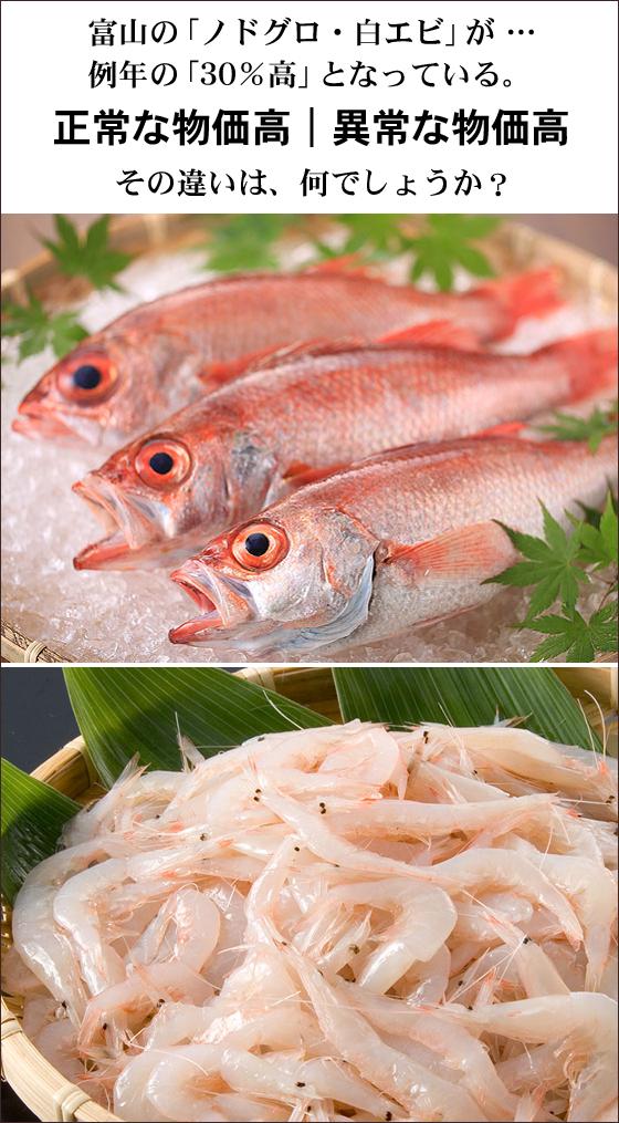 富山の魚介類の高値 フードビジネス 専門家 研究所 ファインド 札幌 太田耕平