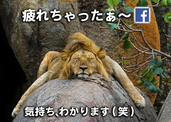 疲れちゃった Facebook フードビジネス 専門家 研究所 ファインド 札幌 太田耕平